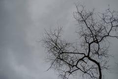 Dead trees on overcast sky. Royalty Free Stock Photo