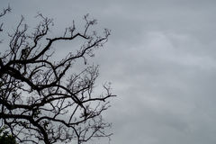 Dead trees on overcast sky. Royalty Free Stock Photography