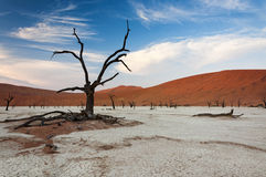 Dead trees and red dunes in Sossusvlei Stock Photos