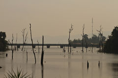 Dead trees in the reservoir with blue sky - Thakhek Loop Stock Photo