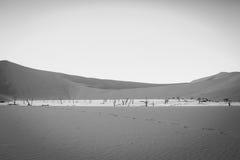 Dead trees in a salt pan in the Deadvlei. Dead trees in a salt pan in black and white in the Deadvlei, Sossusvlei, Namibia Stock Images