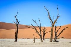 Dead trees in a salt pan in the Deadvlei. Stock Photos