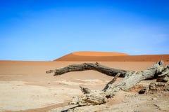 Dead trees in a salt pan in the Deadvlei. Stock Image
