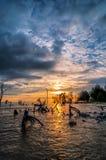 Dead trees in the sea at an eroded coastal line at Kelanang beach. Malaysia at sunset Royalty Free Stock Photos