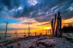Dead trees in the sea at an eroded coastal line at Kelanang beach Royalty Free Stock Photos