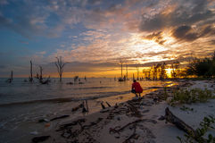 Dead trees in the sea at an eroded coastal line at Kelanang beach Stock Images
