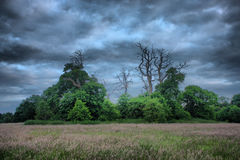 Dead trees in silhouette against a grey sky Stock Photos