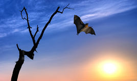 Dead Trees silhouette with flying bat. Halloween background with flying bat over bright sky background Stock Photography