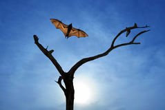 Dead Trees silhouette with flying bat vertical image. Halloween background with flying bat over bright sky background Royalty Free Stock Images