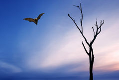 Dead Trees silhouette with flying Fox. Halloween background with flying Fox over bright sky background Royalty Free Stock Photos