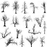 Dead trees silhouette. Silhouetted depiction of dead trees and vines Royalty Free Stock Image