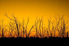 Dead trees in silhouette at sunrise. In countryside Royalty Free Stock Image