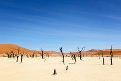 Dead trees at Sossusvlei Stock Photos