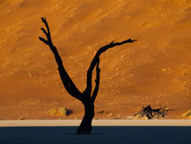 Dead trees in Sossusvlei Royalty Free Stock Images
