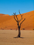 Dead trees in Sossusvlei Stock Photo