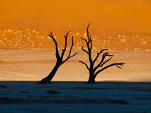Dead trees in Sossusvlei Royalty Free Stock Image