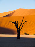 Dead trees in Sossusvlei Stock Photography