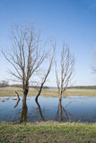 Dead trees standing on the bank of the river in the spring again Stock Photo