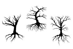 Dead trees with stem and roots. Isolated on white background for ecology concept design Royalty Free Stock Photos