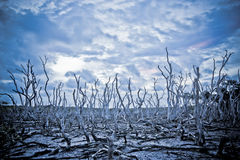Dead Trees with a Stormy Sky. A dead tree forest amongst the mud flats with a stormy sky Royalty Free Stock Photos