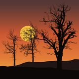 Dead trees with sun or moon in background under orange sky - vec. Dead trees with sun or moon in background under orange sky - spooky vector Stock Photos