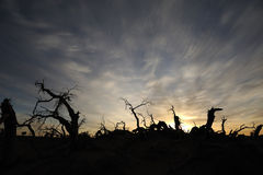 Dead trees at sunrise Royalty Free Stock Images