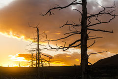 Dead trees on a sunset sky background. Royalty Free Stock Photo