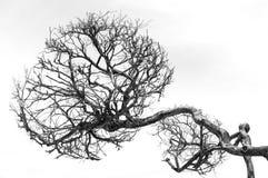 Dead trees Stock Photos