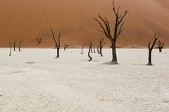 Dead trees view in sossusvlei area. In Namibia Stock Photo