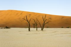 Dead trees view in sossusvlei area. In Namibia Royalty Free Stock Photos