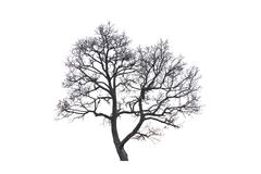 Dead trees. Dead trees on a white background Royalty Free Stock Image