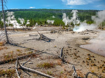 Dead Trees in Yellowstone Royalty Free Stock Images