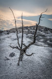 Dead trees of the Yellowstone Royalty Free Stock Photos