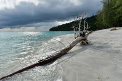 Dead tress at the shore of tropical beach Royalty Free Stock Photos