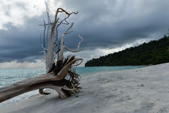 Dead tress at the shore of tropical beach Stock Images