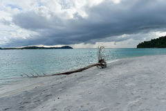 Dead tress at the shore of tropical beach Stock Photo