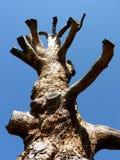 Dead trunk Royalty Free Stock Photos