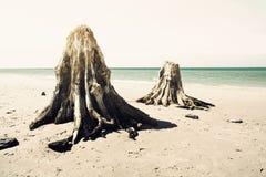 Dead trunks on the beach. Stock Photography
