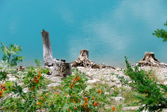 Dead trunks of Lac de Tseuzier Switzerland Royalty Free Stock Images