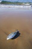 Dead Tuna Royalty Free Stock Photography