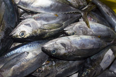 Dead Tuna fish at market Royalty Free Stock Photography