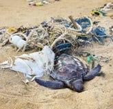 Dead turtle in fishing nets. Dead turtle entangled in fishing nets on the ocean Royalty Free Stock Image