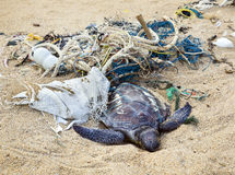 Dead Turtle In Fishing Nets Stock Image