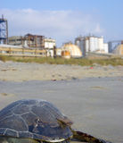 Dead turtle on industrial factory Stock Photo