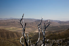Dead twigs frame Anza Borrego State Park Royalty Free Stock Photography