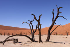 Dead vlei Royalty Free Stock Photography