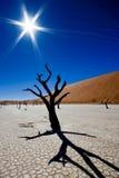 Dead Vlei. Namib Desert, Namibia Royalty Free Stock Photos