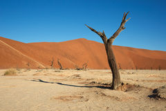 Dead Vlei Stock Photo
