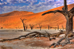 Dead Vlei Royalty Free Stock Images
