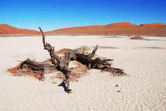 Dead Vlei Royalty Free Stock Photo